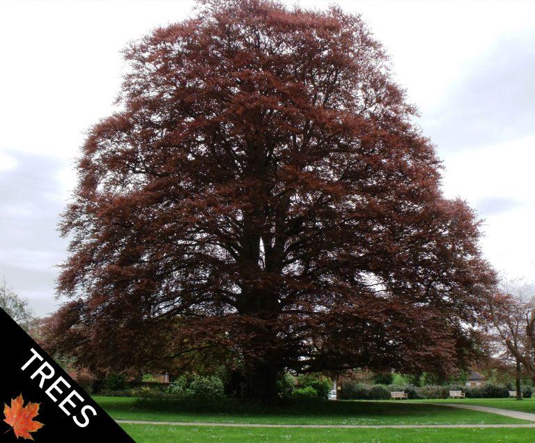 Tree Surgeon Farnham